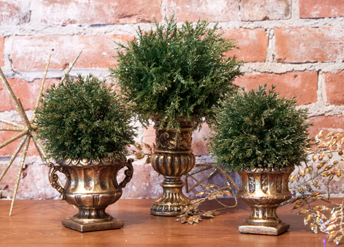 old world rosemary trees: decorative potted topiaries set of